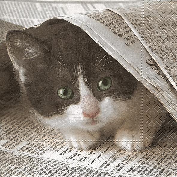 20 Servietten Good News? - Neugierige Katze 33x33cm