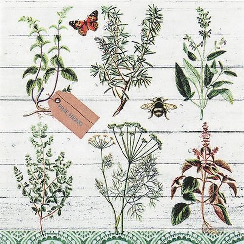 20 Servietten Floral Study - Pflanzenbestimmung 33x33cm