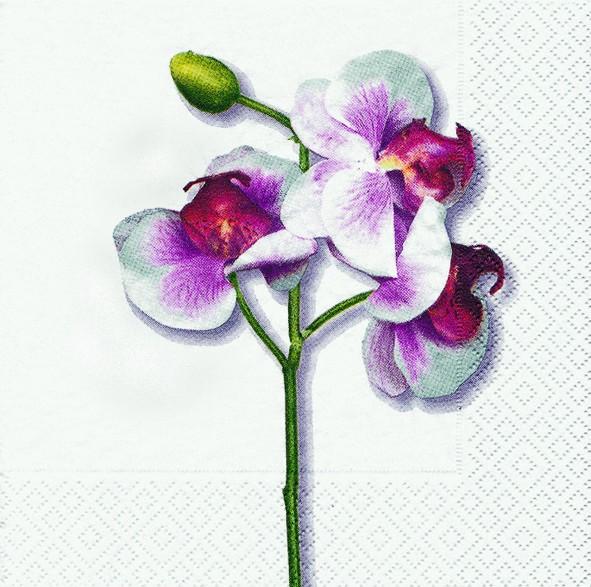 20 Servietten Classic Orchid White - Klassische weiße Orchidee 33x33cm