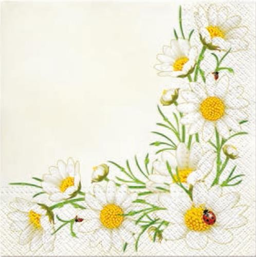 20 Servietten Bunch of Marguerites cream - Bordüre voller Mageriten 33x33cm