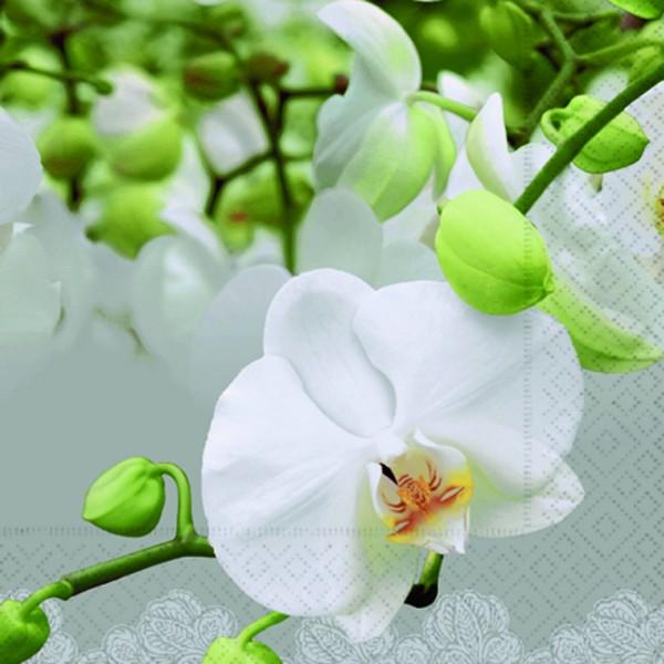 20 Servietten Orchid Festival - Festival der Orchideen 33x33cm