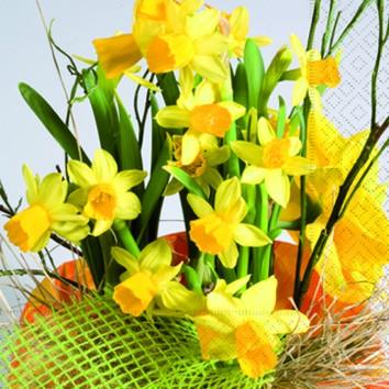 20 Servietten Daffodil Blossoms - Narzissenblüten 33x33cm