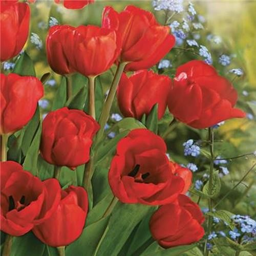 20 Servietten Bunch of Red Tulips 33x33cm