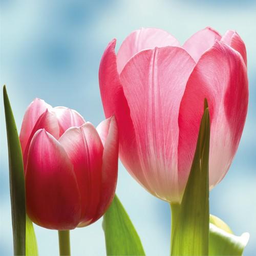 PPD Servietten Pretty Tulips 33x33cm
