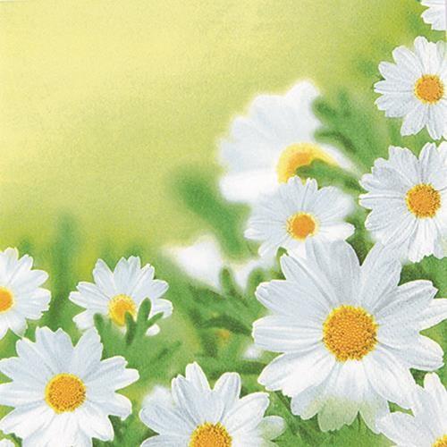 20 Servietten White daisies - Hübsches Margeritenfeld 33x33cm