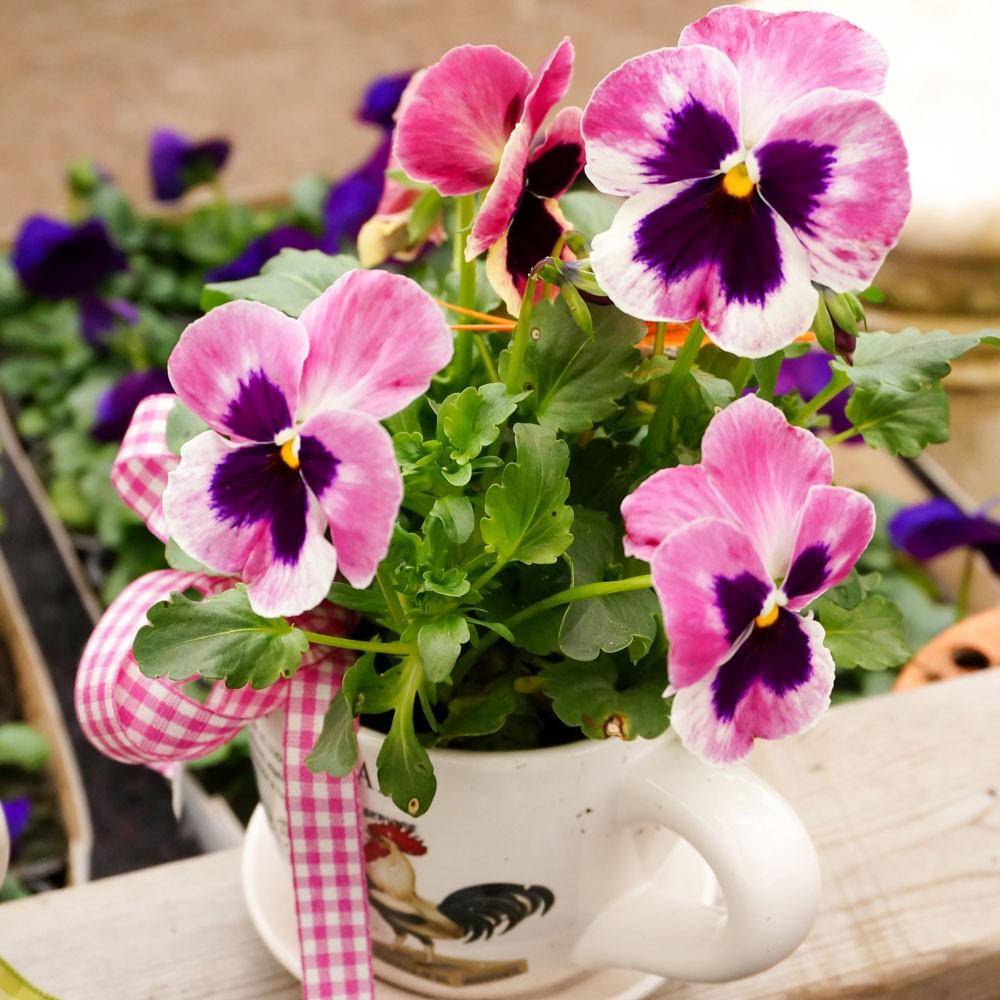 20 Servietten Blumen Korb Tischdeko Motiv Gerbera Dahlien Flower Basket 33x33cm
