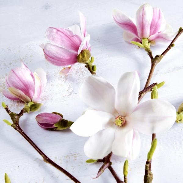20 Cocktailservietten Magnolia – Natürliche Magnolie 24x24cm