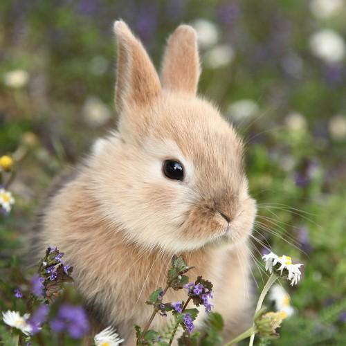 20 Servietten Bunny in field – Hase im Blumenfeld 33x33cm