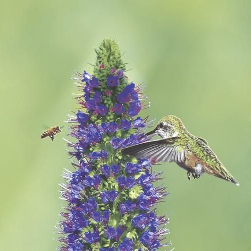 20 Servietten Bird and Bee 33x33cm