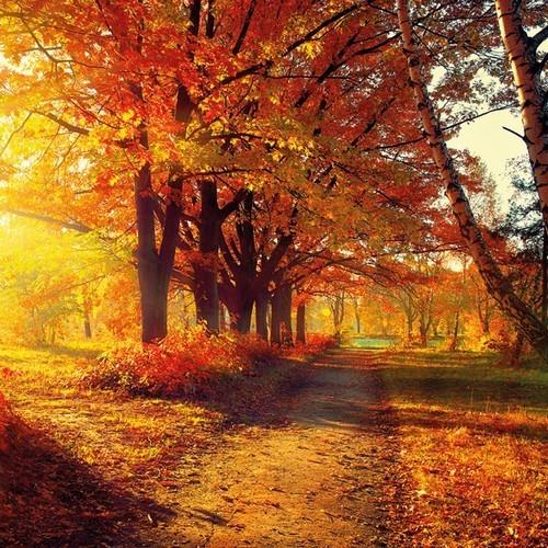 20 Servietten Autumn Park - Park im Herbst 33x33cm